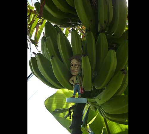 Docman plantain ideas to expand to Grenada